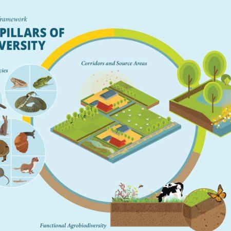 03-4-pilars-of-biodiversity