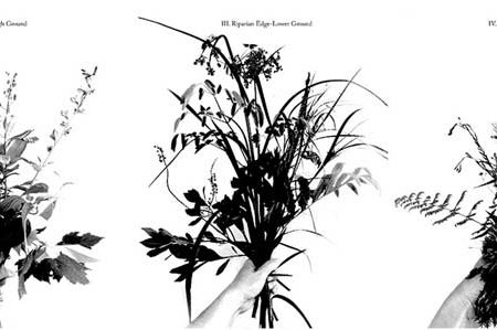 06_littoral-bouquets