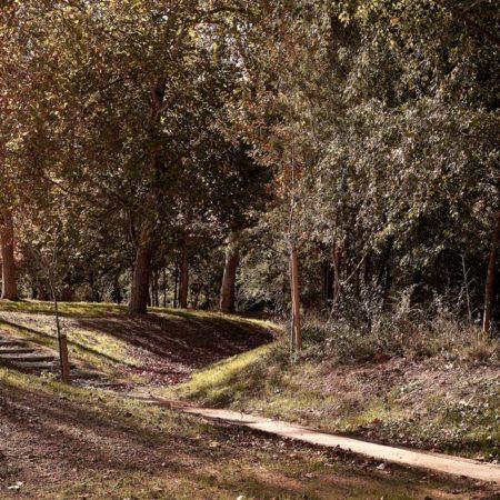 aranzadi-park-paths-end-floodable-forest-pedro-pegenaute-300-dpi