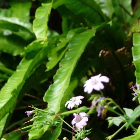 buroharro_biodiversibiergarten4