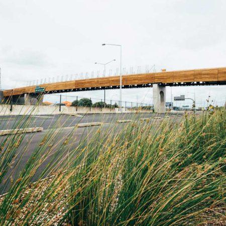 isthmus_taumanu_reserve_bridge_5