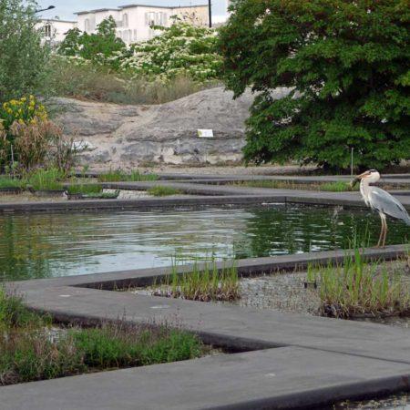 mp-botanical-garden-v
