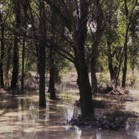 aldayjover_gallego-riverside-recovery_flood_-photo-by-jordi-bernado