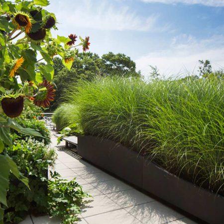 10-SUNY-Simons-Center-Roof-Garden