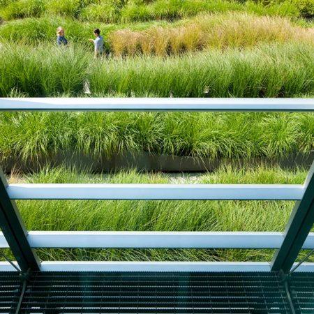 12-SUNY-Simons-Center-Roof-Garden-View