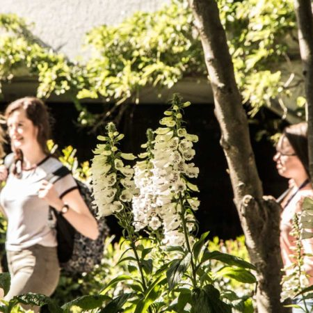 16-Foxgloves-and-people