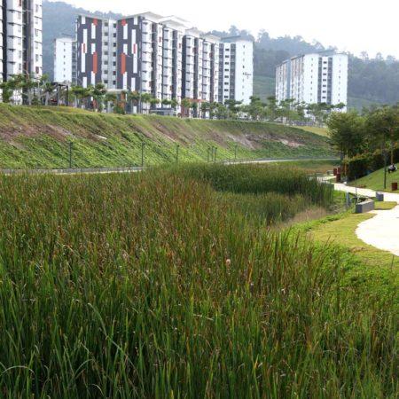 22-Wetland