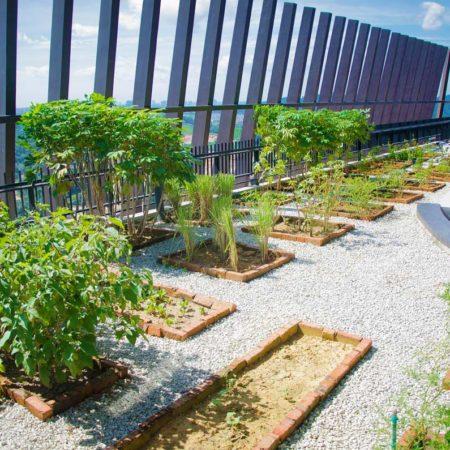 23-Urban-Farming