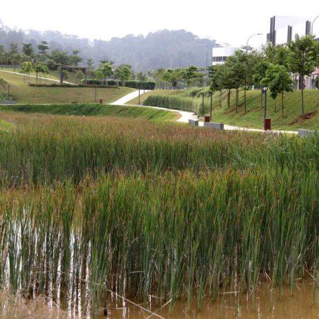 24-Wetland