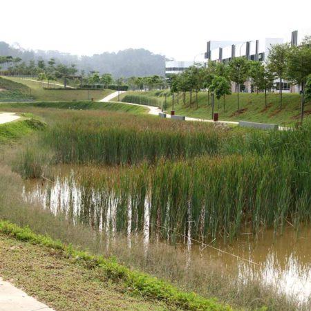 25-Wetland