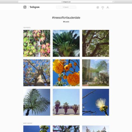 Trees-of-Fort-Lauderdale_Cadence-1