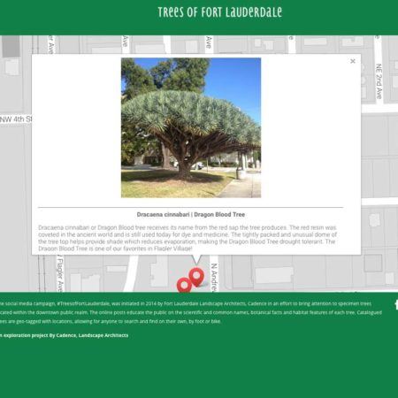 Trees-of-Fort-Lauderdale_Cadence-6