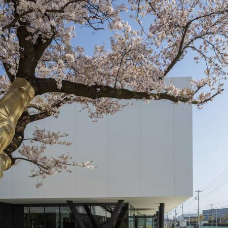 cherry-blossom-and-Isuzu-Plaza