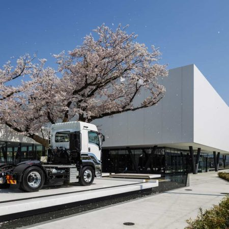 cherry-blossom-in-full-bloom