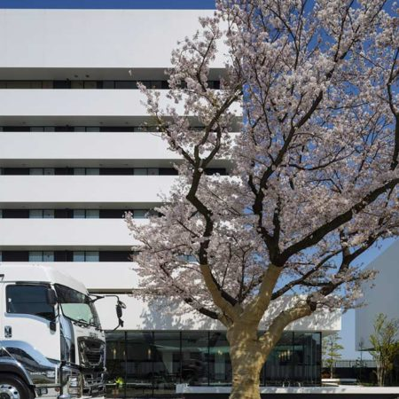 exhibited-vehicle-and-big-cherry-blossom-tree