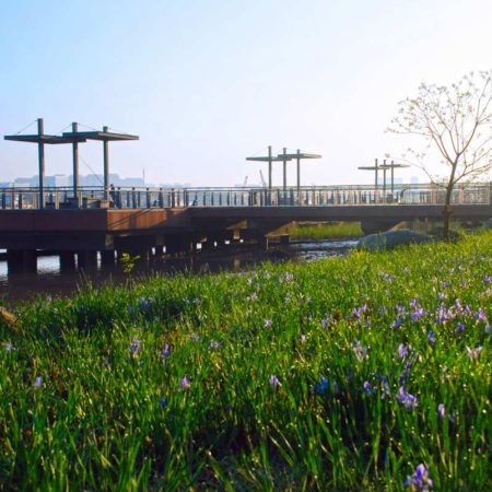 06_After-Regenerated-Dock-with-Indigenous-Meadow