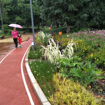21-path-and-rain-garden
