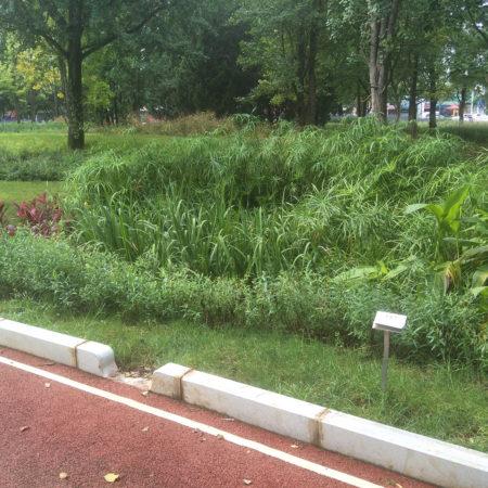 22-path-and-rain-garden