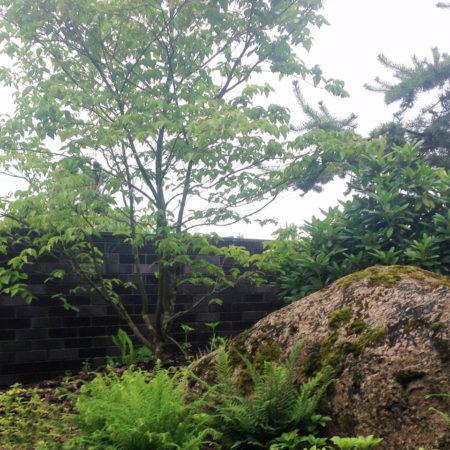 9-8-shady-garden