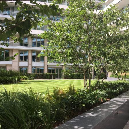 Ground-lawn-view