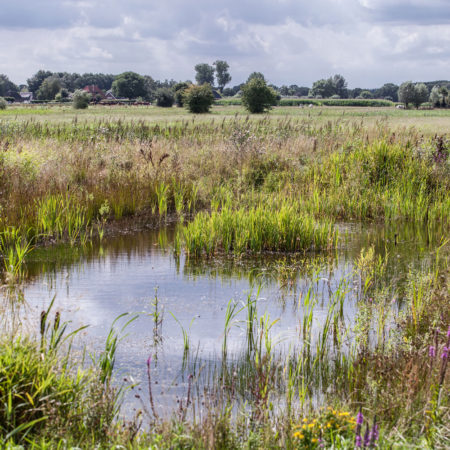 Landscape-Zone---pools