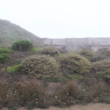 Presidio-Coastal-Trails_15