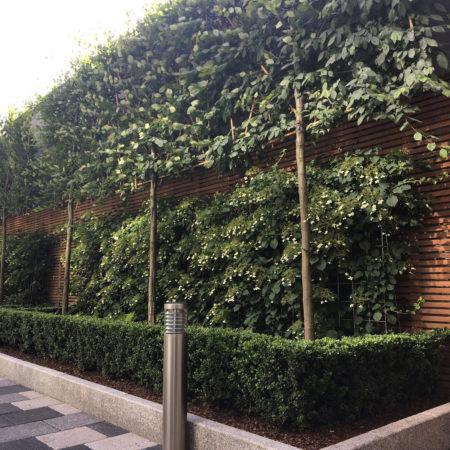 Retaining-wall-planting