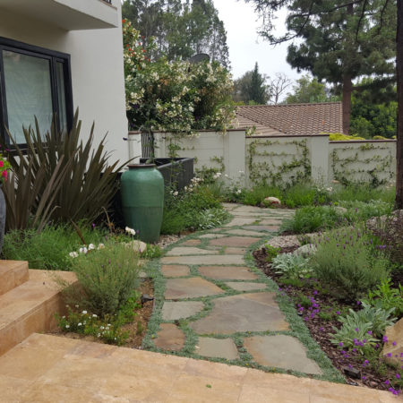 COYOTE-FREE-FRONT-YARD-2