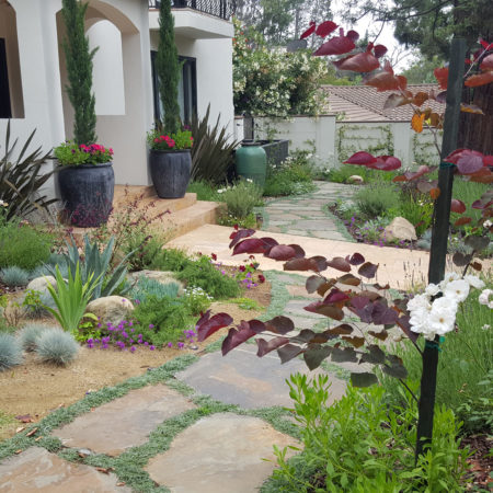 COYOTE-FREE-FRONT-YARD