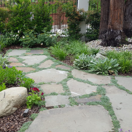 COYOTE-FREE-FRONT-YARD-5