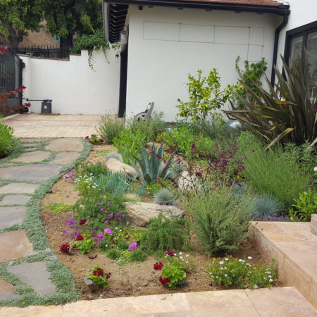 COYOTE-FREE-FRONT-YARD-7