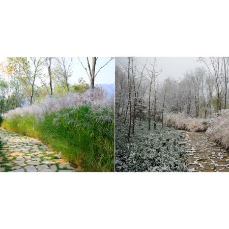 Beijing-CITIC-Jinling-Hotel-landscape-design-21