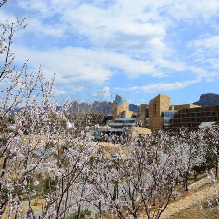 Beijing-CITIC-Jinling-Hotel-landscape-design-7