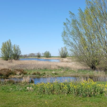 Existing wetlands are integrated in the new landscape - photo H+N+S