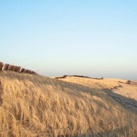 Photo-dunes-under-construction