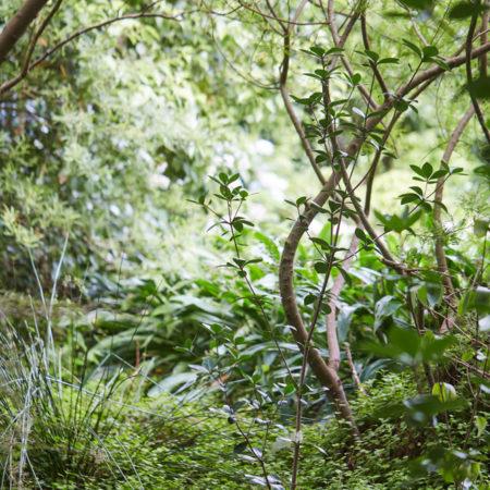 XWD_Maungawhau_Forest_-300_web