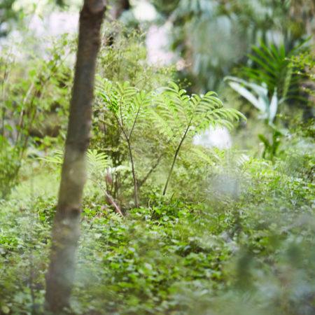 XWD_Maungawhau_Forest_-316_web