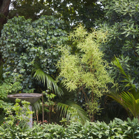 XWD_Maungawhau_Forest_-362_web