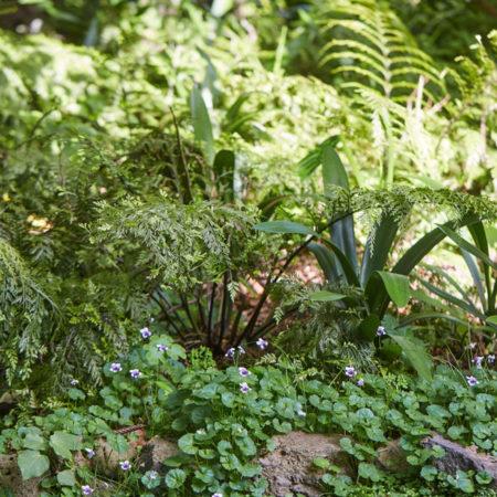 XWD_Maungawhau_Forest_-588_web