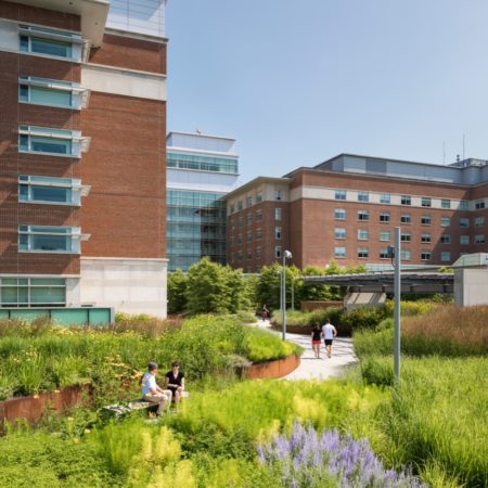Green Roof at Reading Hospital