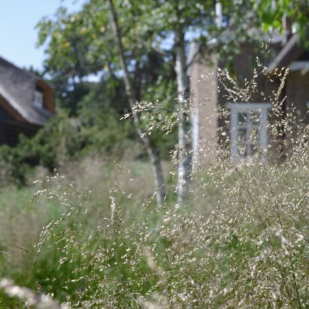 18--Andrew_van_Egmond_contemporary-nature-garden-Holland