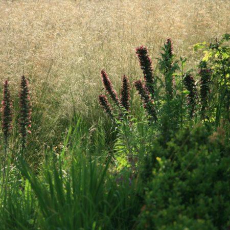 St Audoens Park - Dublin - Dermot Foley Landscape Architects (14)
