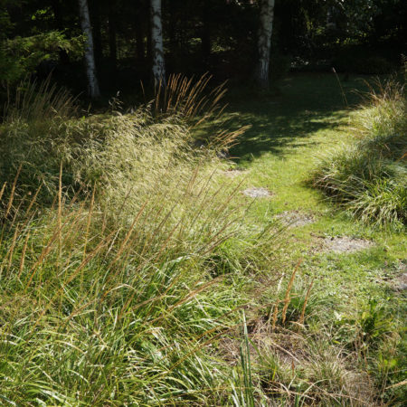 wild-grass-patches--in-contrasts-to-cultivated-cut-lawn