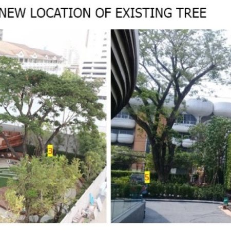 Existing trees location in landscape