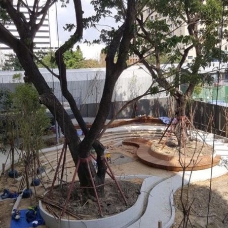 Curvilinear design forms are well integrated with the giant rain trees which are feature in the garden (under construction)