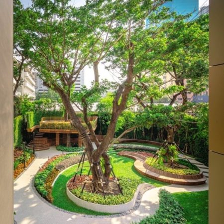 Curvilinear design forms are well integrated with the giant rain trees which are feature in the garden (completed)