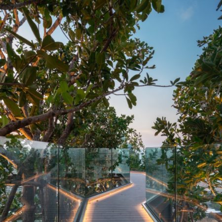 A tree top walk connected from pool level