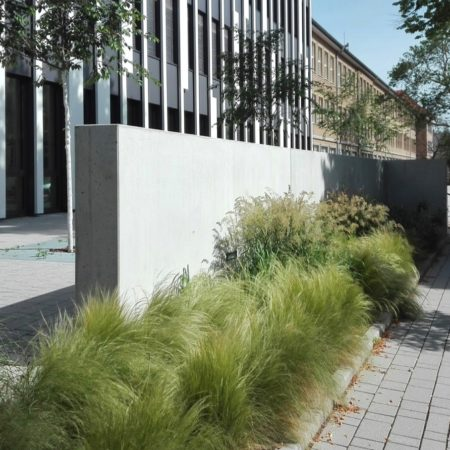 11-grasses