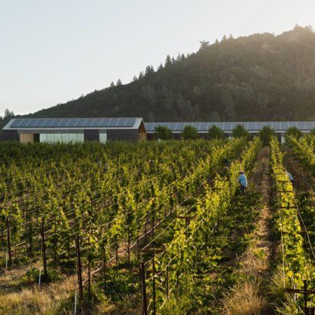 Silver Oak Winery_13