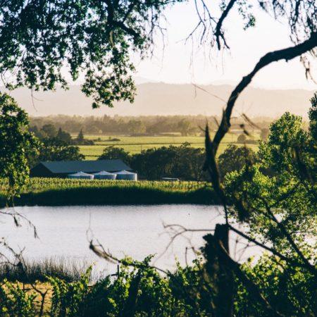 Silver Oak Winery_15